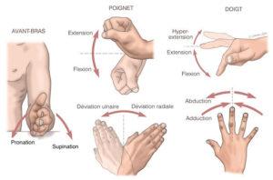 schema montrant les differents mouvements du poignet et des doigts