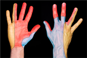diagram outlining the nervous system of the hand with colour codes