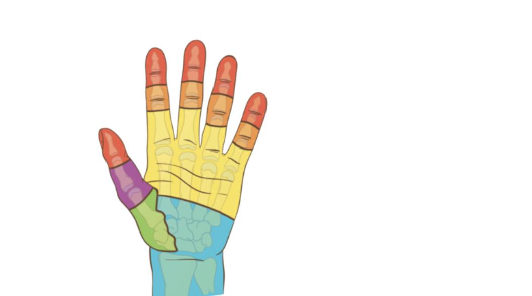 Code couleur: attelles et positions d'immobilisations de la main et du poignet en urgence